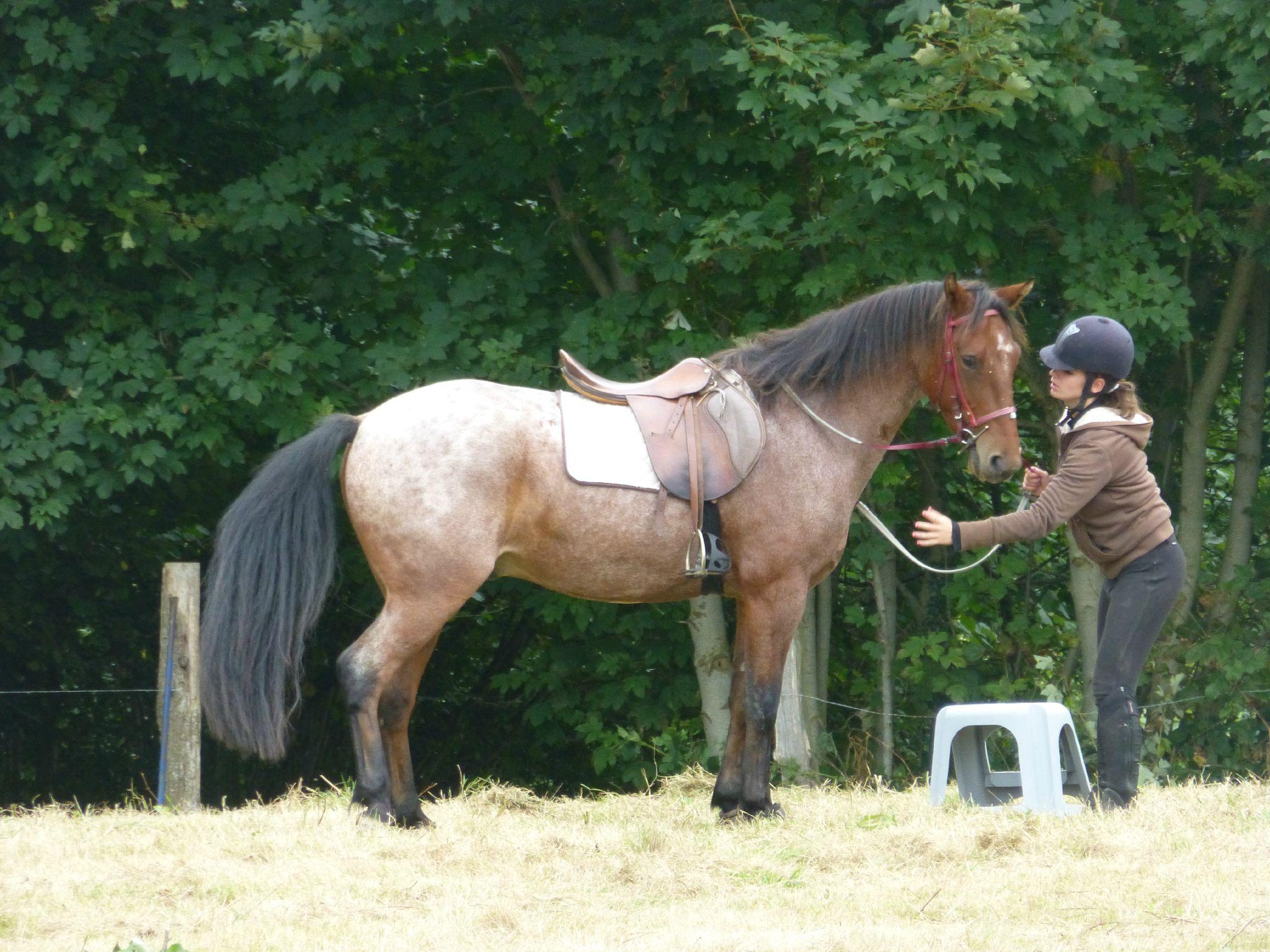 Jeux équestres manchots - parcours de pleine nature après-midi (212)