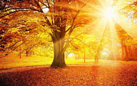 Sunset-autumn-forest-yellow-leaves-trees-sun_m