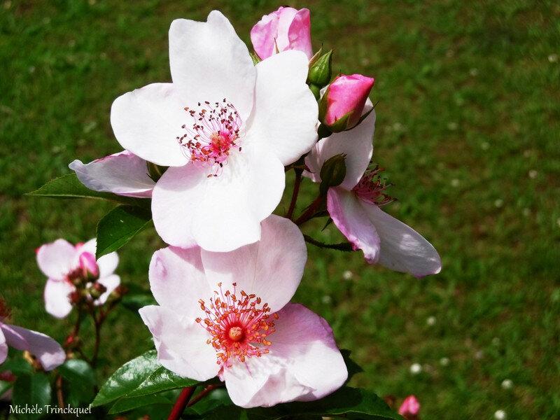 Fleurs de Léon 310518