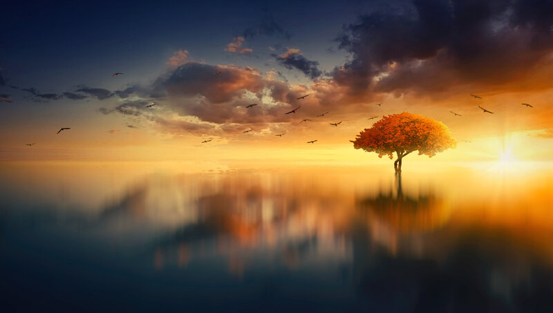 tree_horizon_sunset_128367_5000x2830