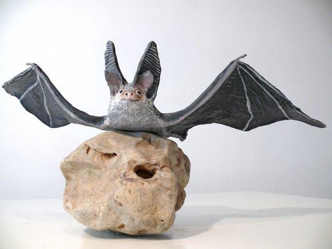 Oreillard gris