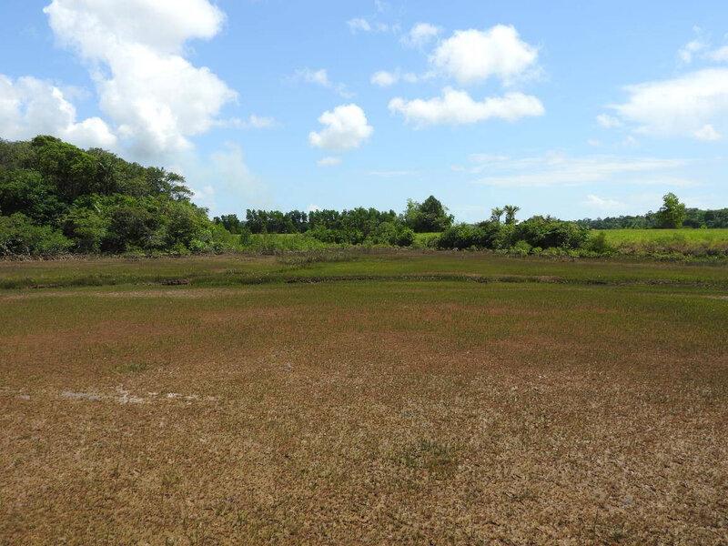 La Mangrove à marée basse1