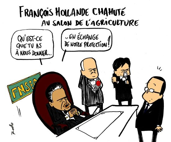 coq-fnesea-hollande