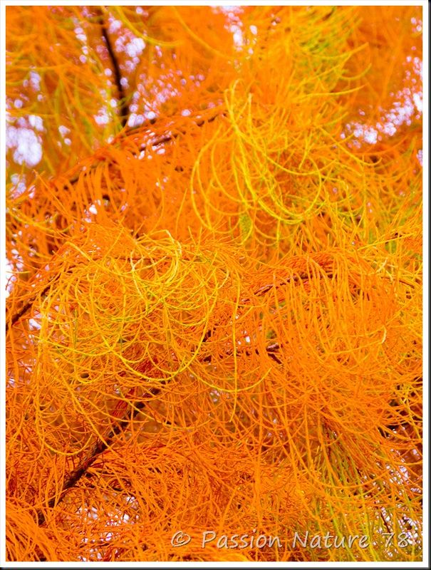 Feuilles en automne (6)