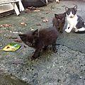 Mariem et karlie ... chatte typée chartreuse et 3 chatons sécurisés avant irma