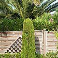 Esprit d'un jardin dans le roussillon...
