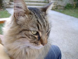 chat de Marly