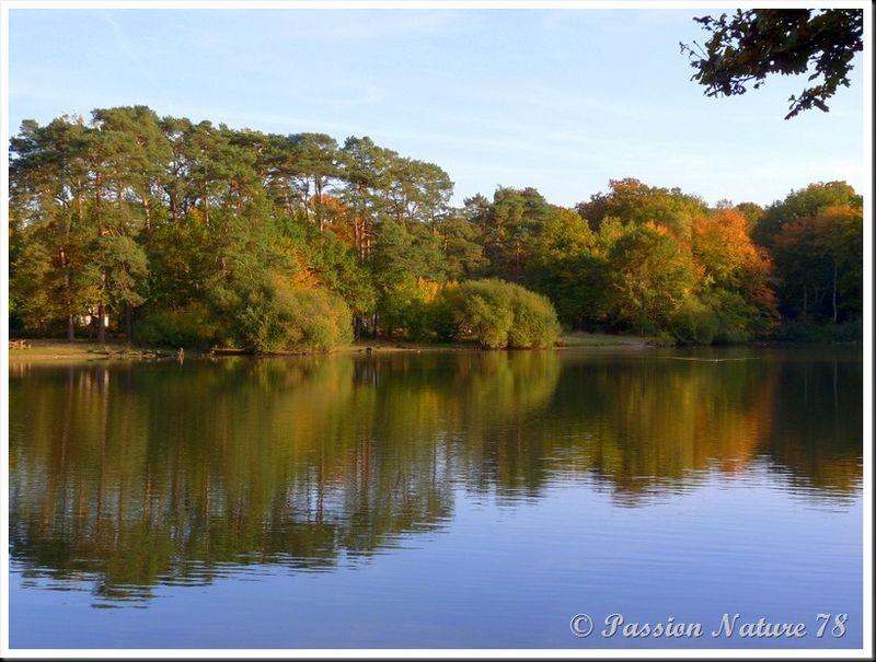 L'étang d'Or (19)