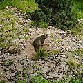 05 Les Marmottes (7)