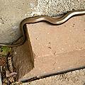 Reptiles et batraciens.