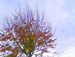 arbre_et_ciel_d_automne