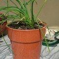 Voici mes plantations d'herbes aromatique