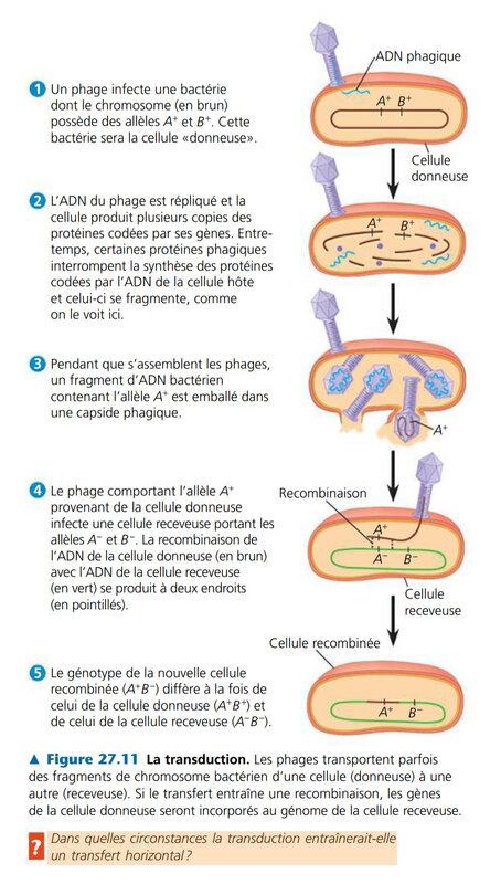 transduction virale