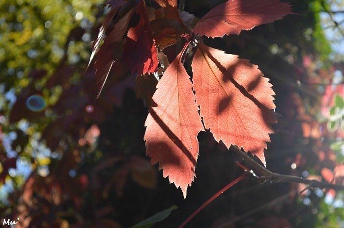 171008_automne_parc_lorient_4