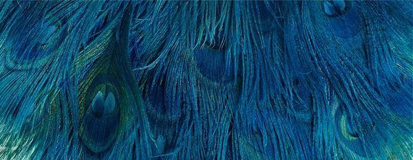dior bird of paradise 3
