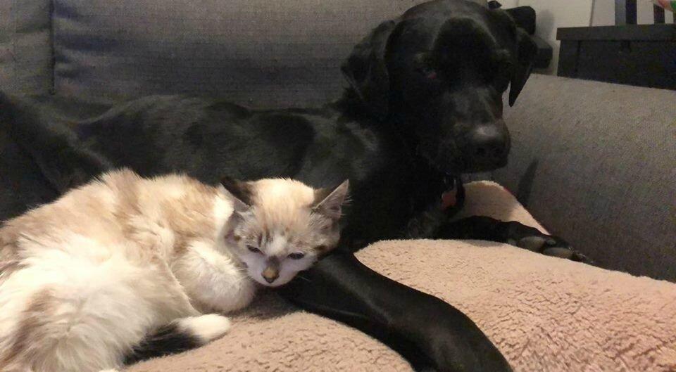 Nero et son copain chat