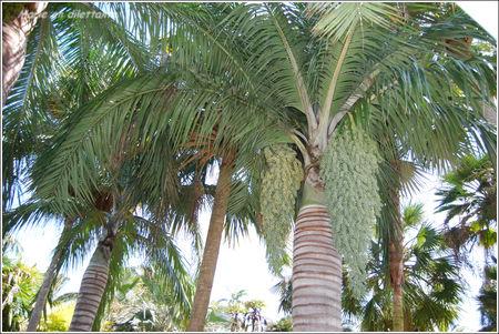 sous_les_palmiers