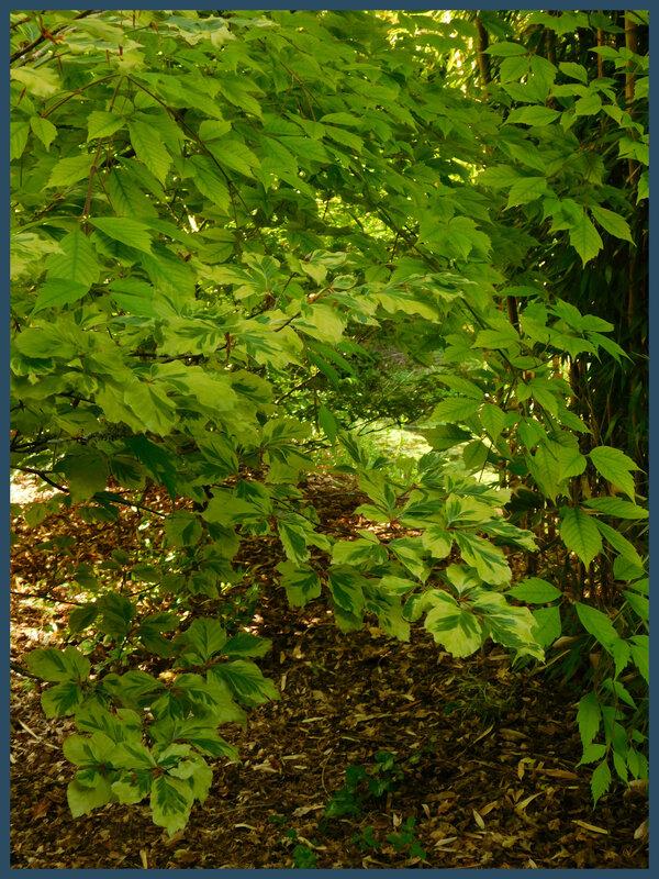 Arboretum des prés de Culand20