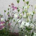 fleur 2 nathalie dentzer