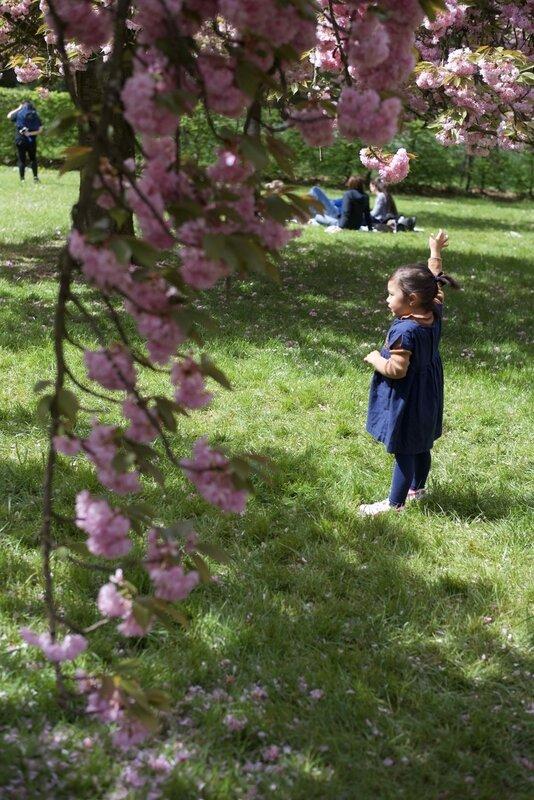 l'enfant et cerisier - 1