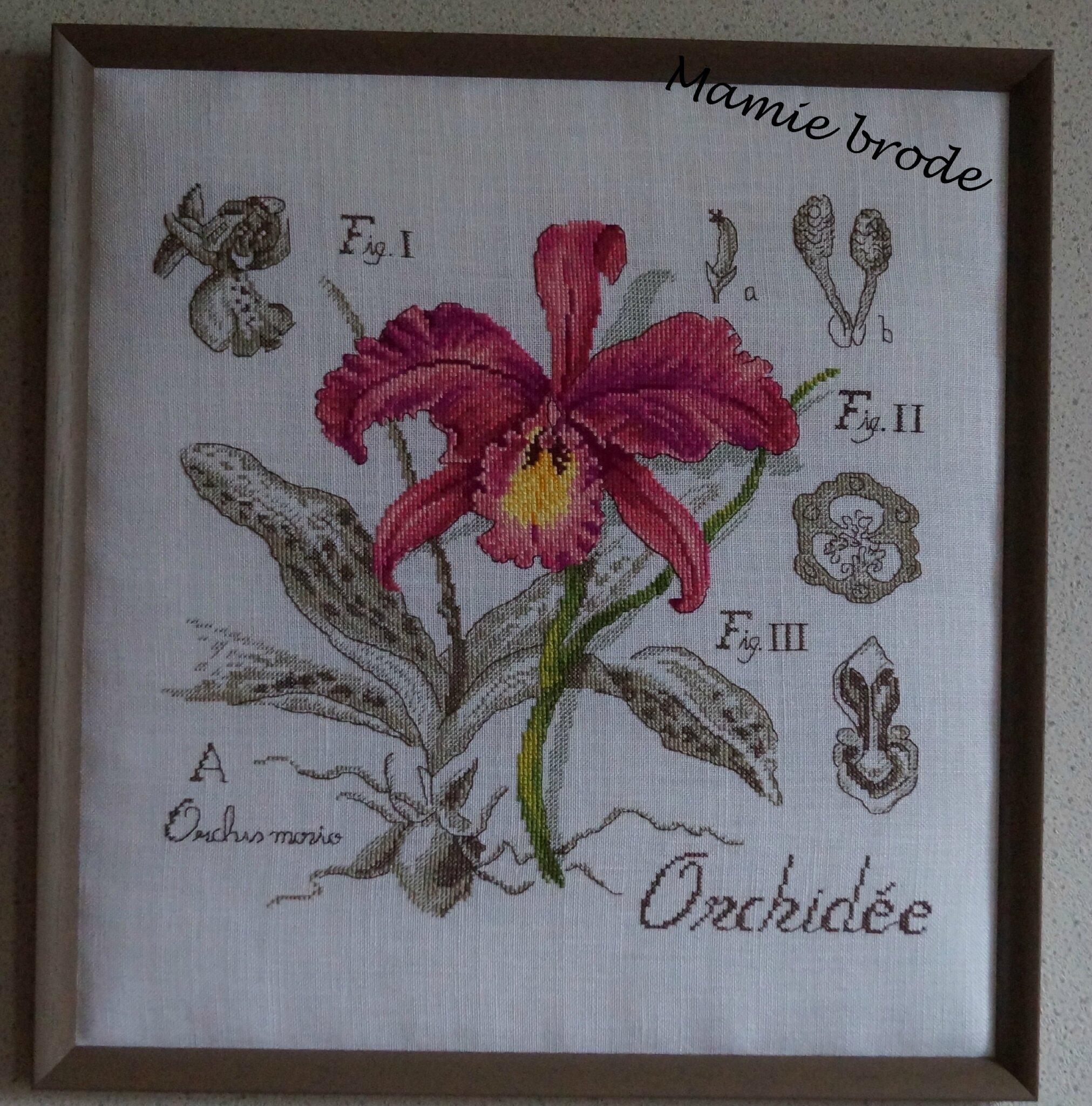 39) Véronique Eginger - L'Orchidée