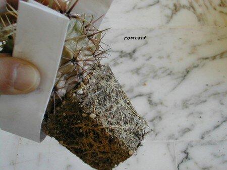 rempotage_d_une_plante_enracin___6_