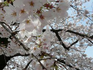 Canalblog_Tokyo03_06_Avril_2010_027