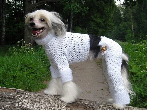 dog_in_knit_pants