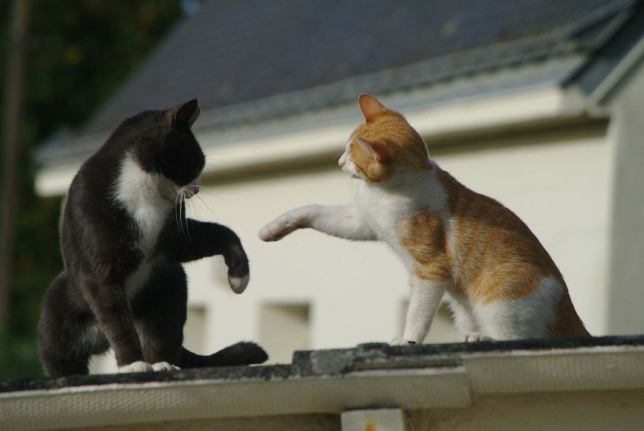 joute_amicale_chats