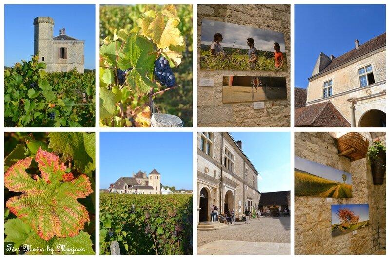 Couleurs d'automne Vignes14