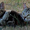 Minette et son chaton