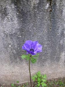 jardin_octobre_015