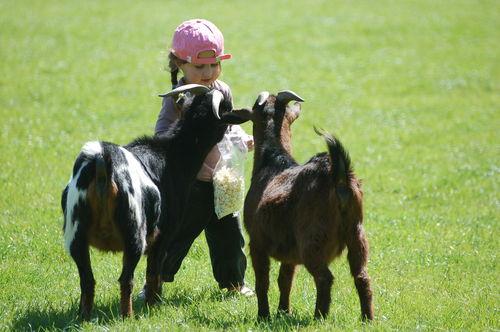 Sérieux ! Je nourris les chèvres !