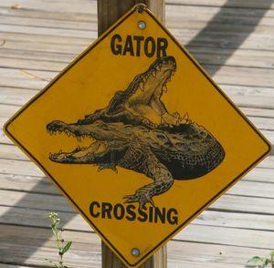 gator_crossing