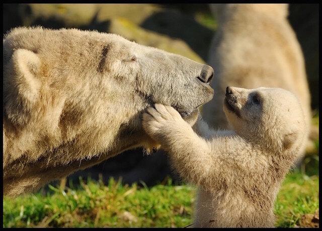 amour ourse et ourson