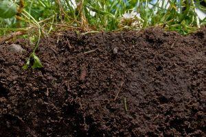soil-300x200
