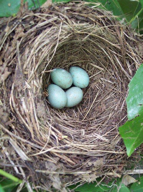 nid du 20 avril 2