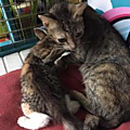 Maman et ses 4 chatons