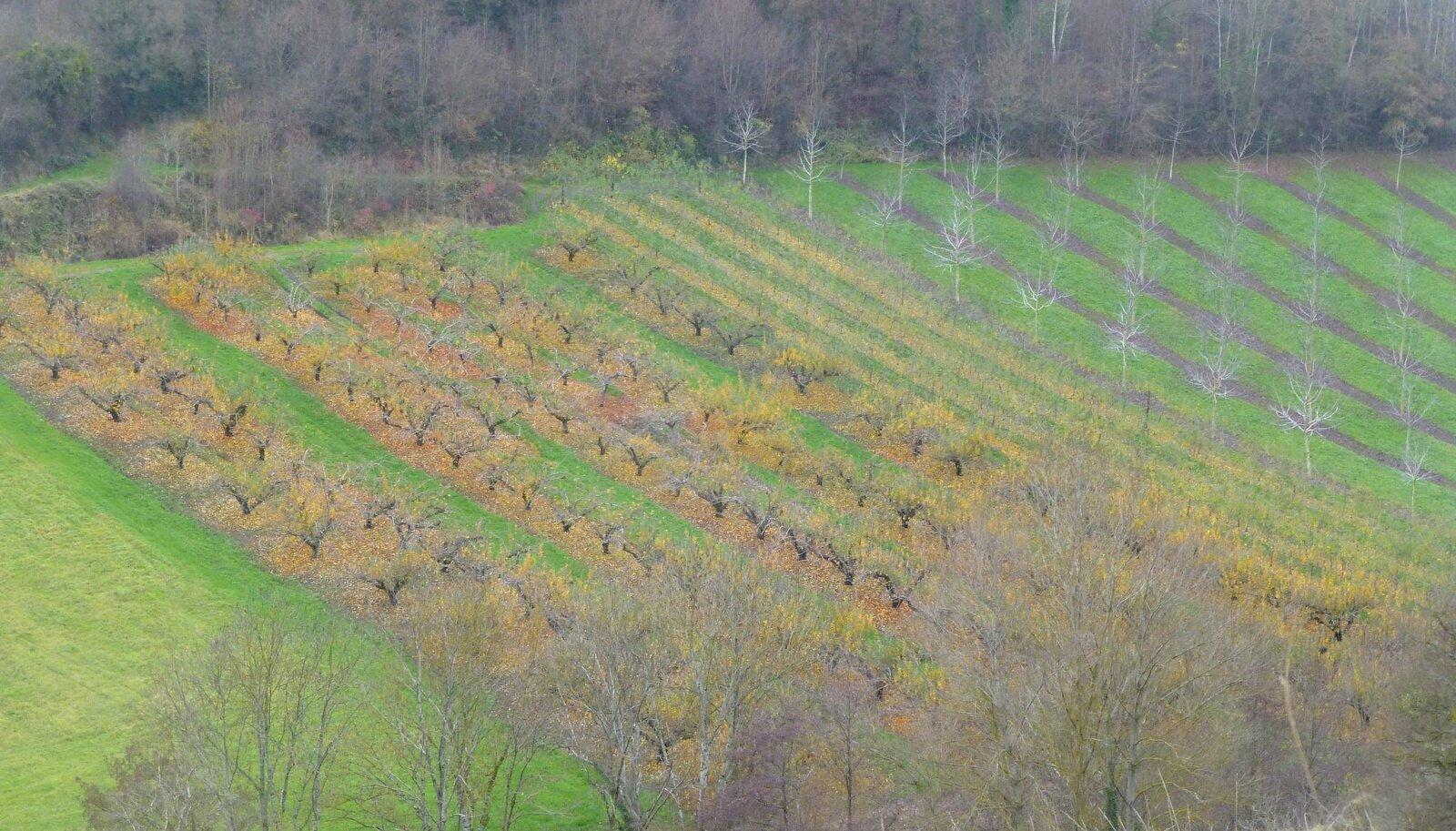 Plantations à Saint-Floret