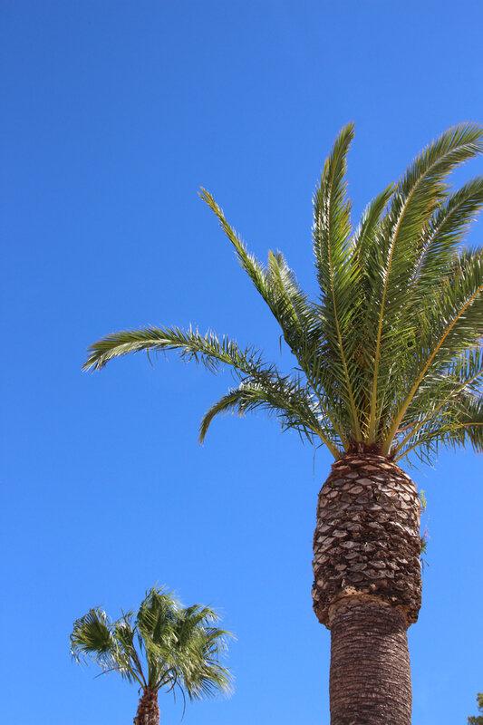 palmiers_plage