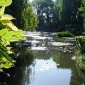 l'étang aux nymphéas