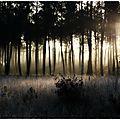 Premières gelées au soleil levant.