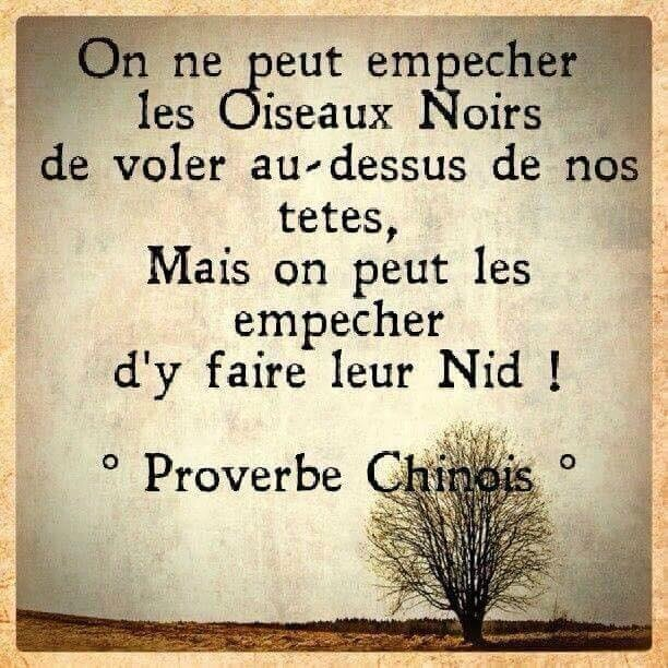 Proverbe chinois-oiseaux noirs