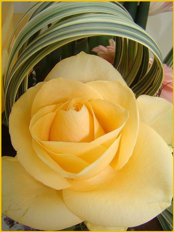 rose_printemps