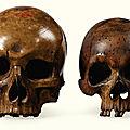 Deux crânes en bois sculpté, Allemagne XVIIe-XVIIIe siècle