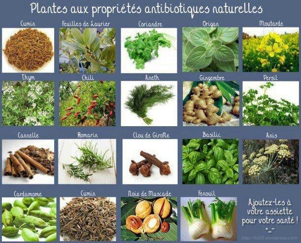 Plantes antibiotiques