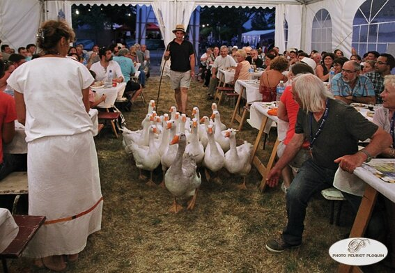 EAUZE_FESTIVAL_GALOP_ROMAIN_2015_le_banquet_romain_arrivee_des_oies