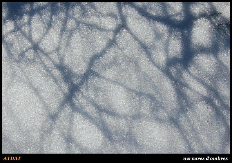AYDAT - nervures d'ombres
