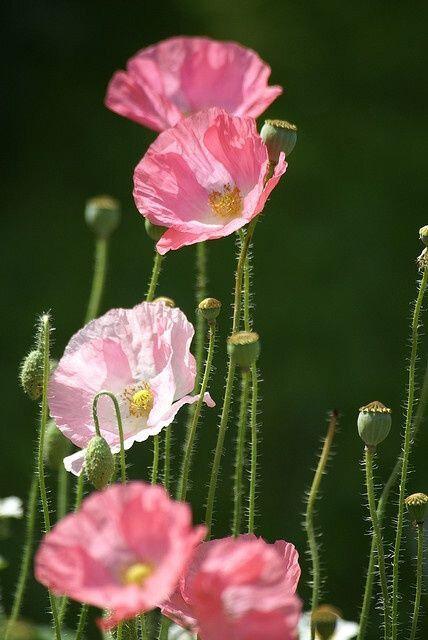 Pensée florale ...