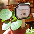 La decopelemele - les plantes . . . dans la maison